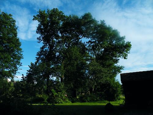 20090530 261 1109 Jakobus Maslacq Cambarrat Wald Bäume