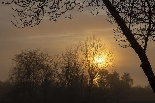 maryland leonardtown bretonbay fog earlymorning winter mist md unitedstates