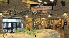 Ruth the Gorgosaurus