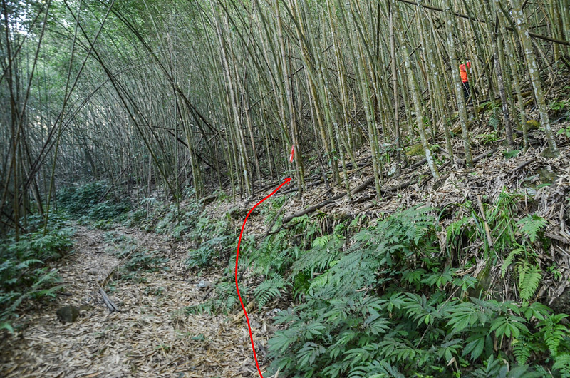 雪山坑山北峰竹林切入口