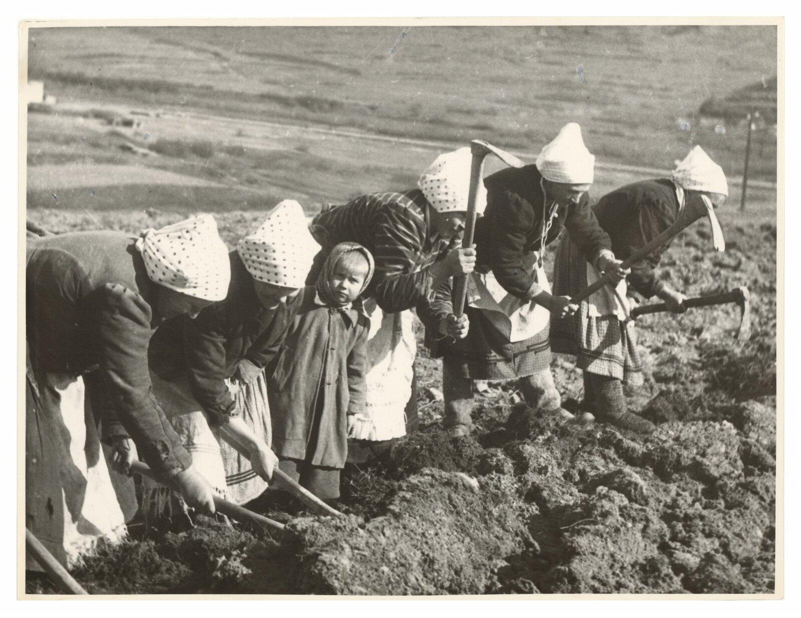 1940. Копачки
