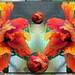 Hibiscus dream by PaulO Classic. ©