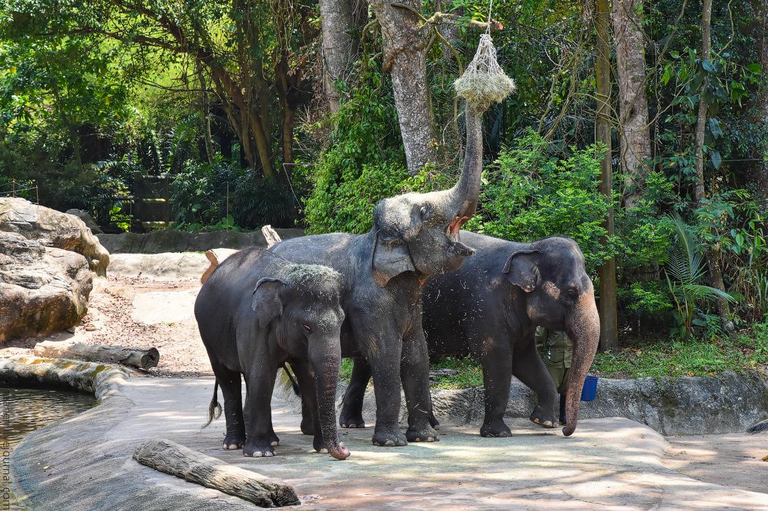 Singapore-zoo-(47)