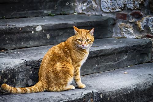 Ode al Gatto - ode to the cat