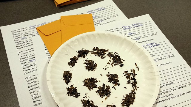 A paper plate with two dozen small piles of seeds, on top of a sheet of labels and two small brown envelopes.