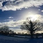 Winter Sonne am blauem Himmel -  18. Januar 2019 - Hohenfichel - Schleswig-Holstein - Deutschland