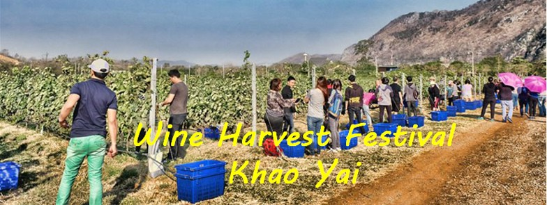 Wine Harvest Khao Yai