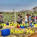 Wine Harvest Khao Yai