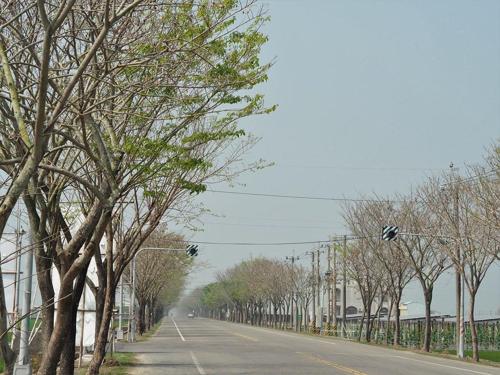 白河木棉花季 (18)