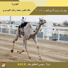 صور سباق الحقايق (الأشواط العامة) مهرجان سمو الأمير المفدى صباح 31-3-2019