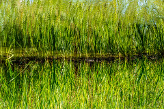 Green Mirror - Photo of Sérigny