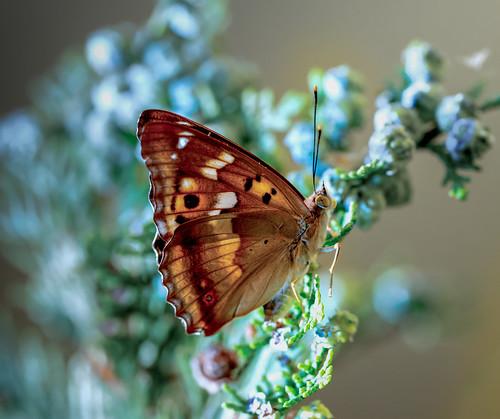 Schmetterlinge_21