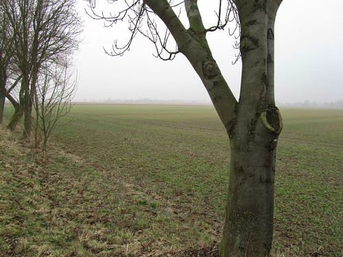 20110316 0203 189 Jakobus Feld Nebel Bäume