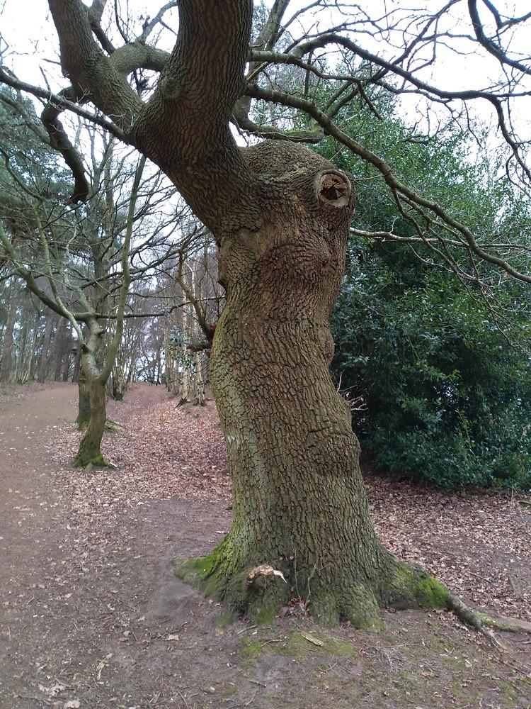 Wonky tree Ood?