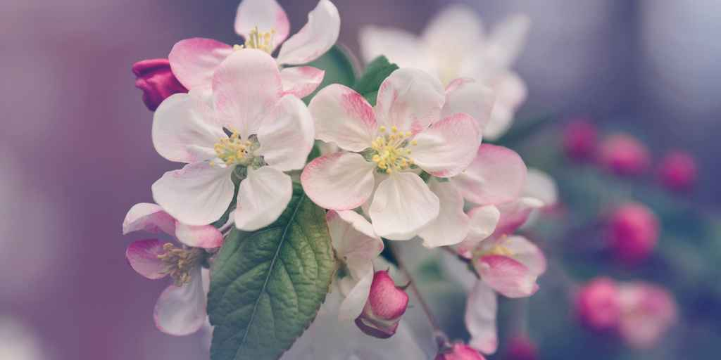 fleurs-charles-darwin-sélection-naturelle