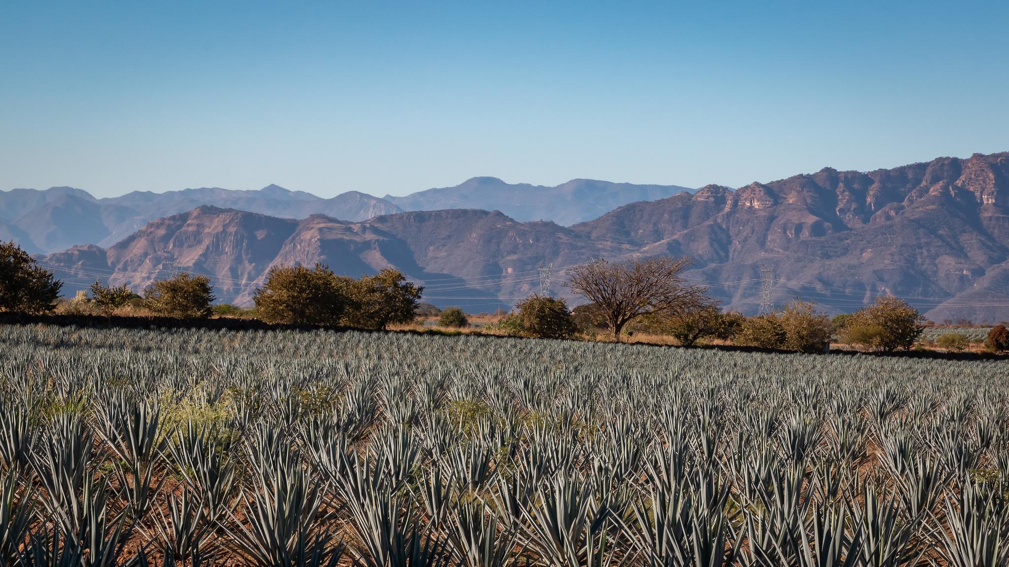 Tequila - Jalisco - [Mexique]