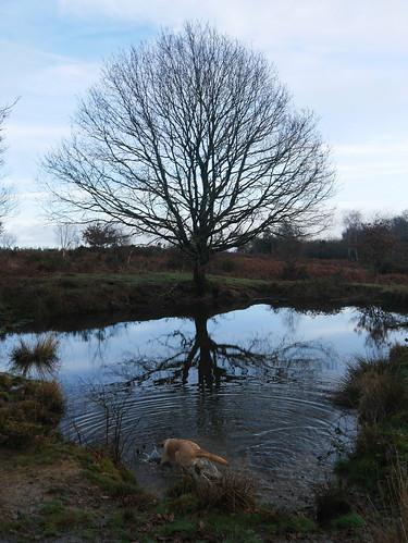 Tidenham Common and a Puppy