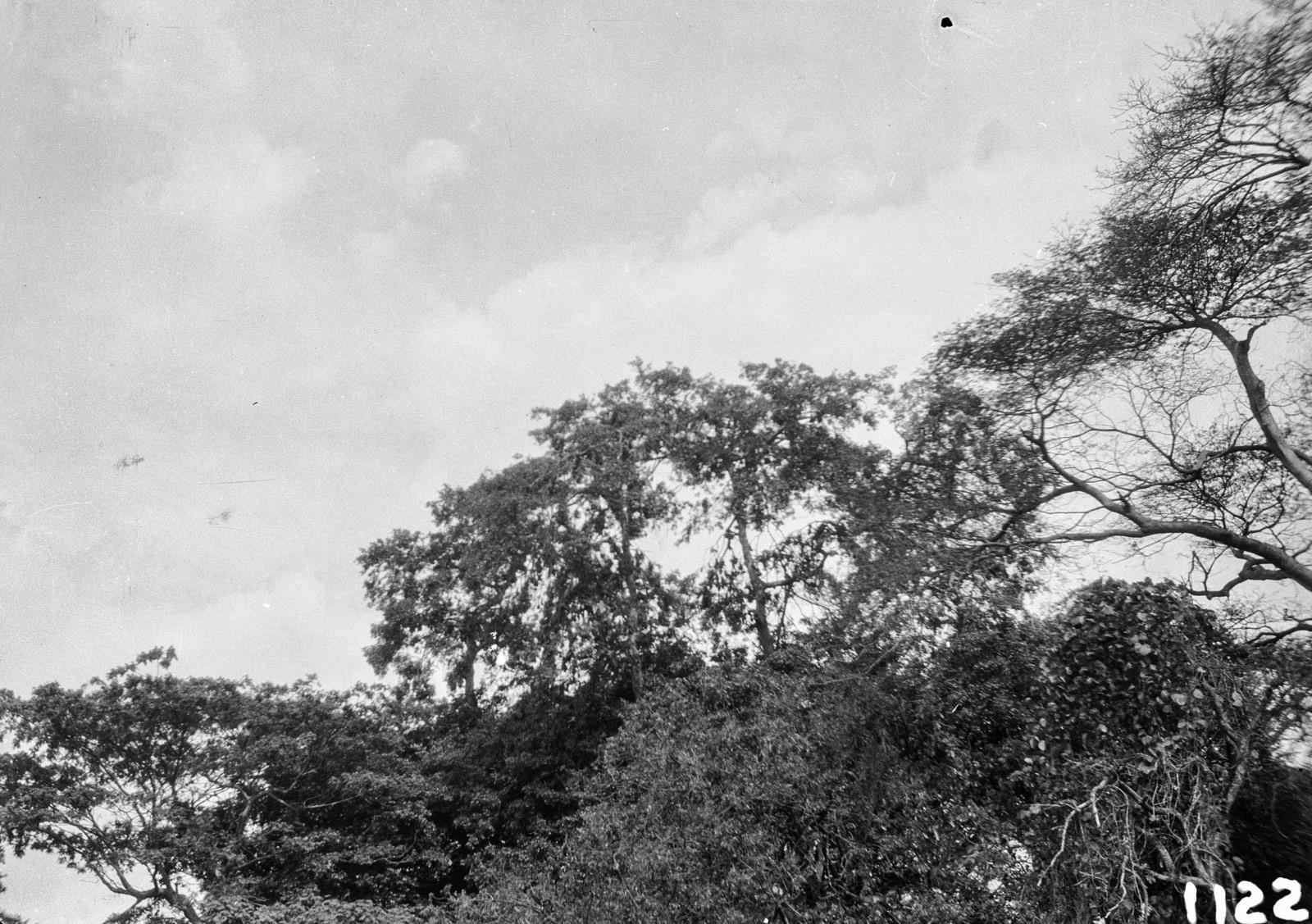 1122. Лундази. Вид на верхушки деревьев