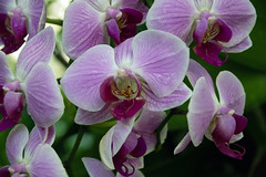 2019 Orchid Show-12