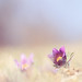 """""""La belle du printemps"""""""