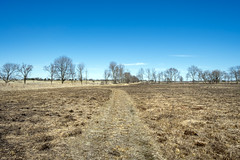 Chesney Prairie