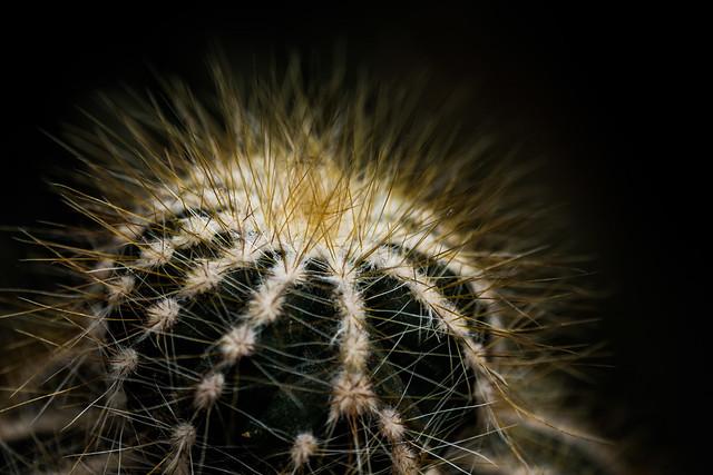BotanicalGarden_Cactus1, Fujifilm X-T20, XF55-200mmF3.5-4.8 R LM OIS