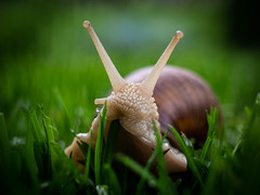 Even at a snail's pace you get ahead ...