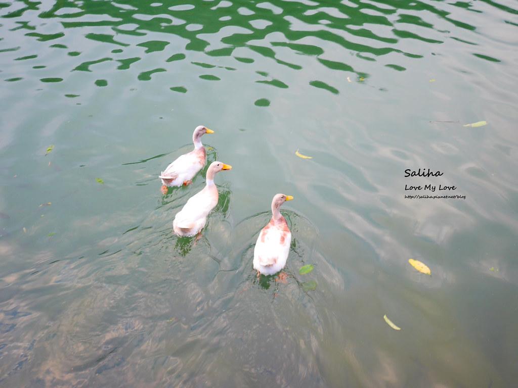 宜蘭三星兩天一夜一日遊景點推薦長埤湖清水地熱谷附近景點 (5)