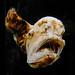 Deepsea Anglerfish by Steve Taylor (Photography)