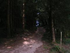20080910 34446 1011 Jakobus Wald Weg