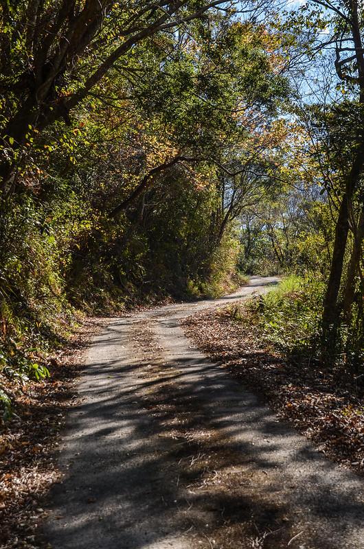 小關山林道 1