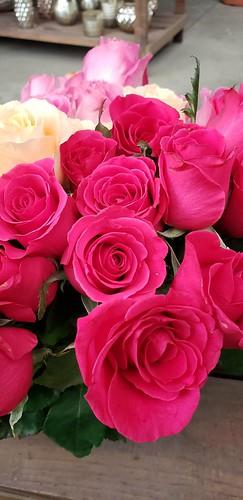 Rosas!