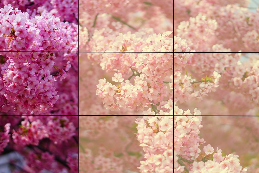 3分割面 単焦点桜 桜全体像 4000