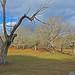El árbol muerto by Luis Mª