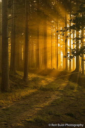 Dawn near Bakkeveen