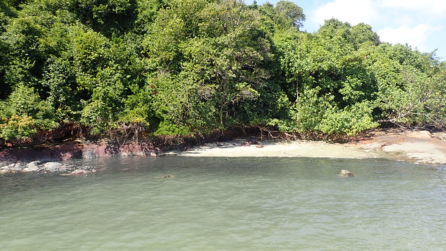 Black water at Chek Jawa