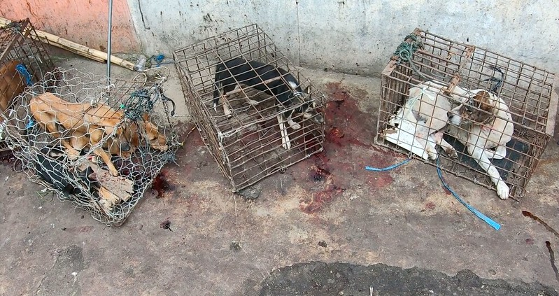 Dogs in cages in Indonesia's markets