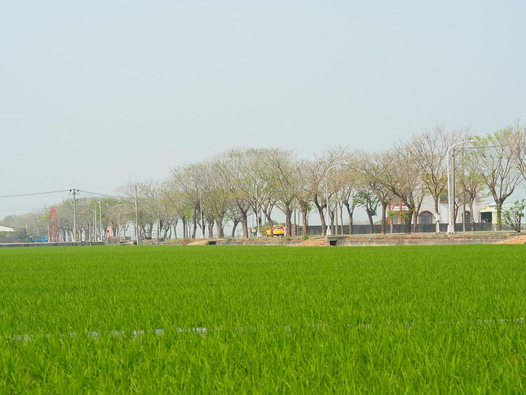 白河木棉花季 (17)