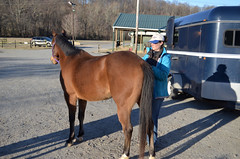 2019-03-17 (4) horse show at Prince George's County Equestrian Center - Nicole