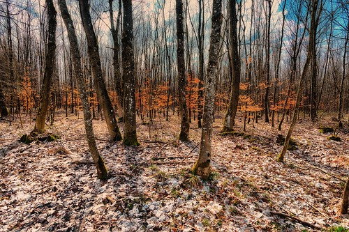 Early spring in a deciduous forest
