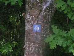 20080515 22995 0905 Jakobus Muschelsternzeichen Baum - Photo of Saint-Sixte