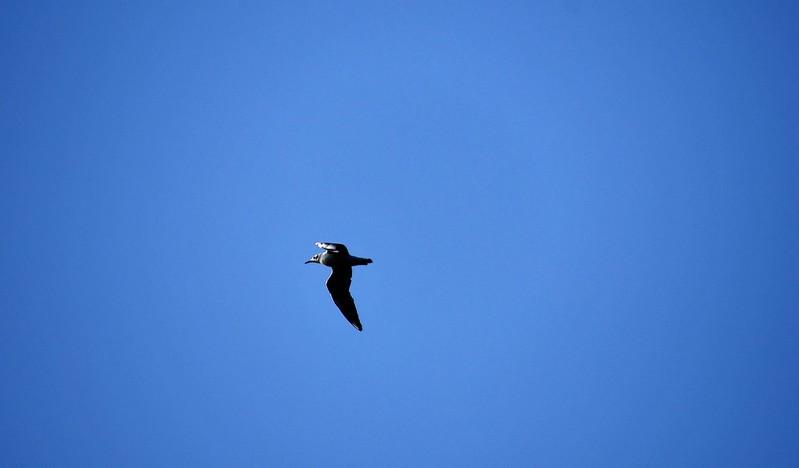 Flying birds 19.02 (1)