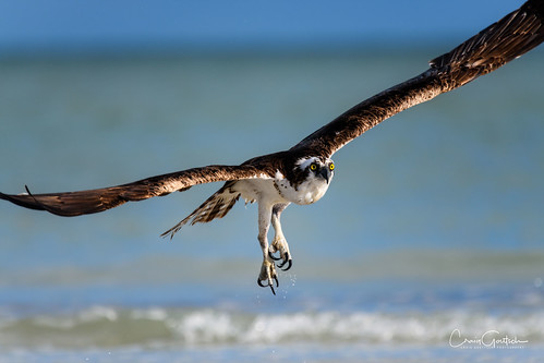 My, what sharp talons you have!