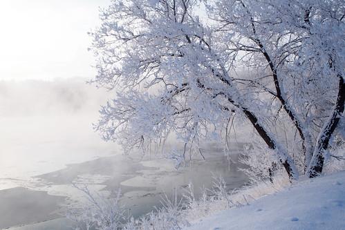 olympus omd em5 winter frost river saskatoon saskatchewan canada cold tree