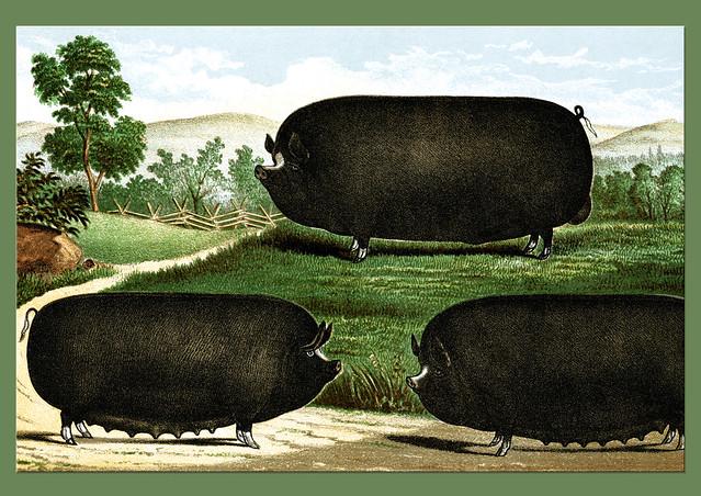 Künstlerische Freiheit: walzenförmige Schafe und Schweine, zylindrischer Körperbau - Künstler (mir) unbekannt - Wer weiß was?
