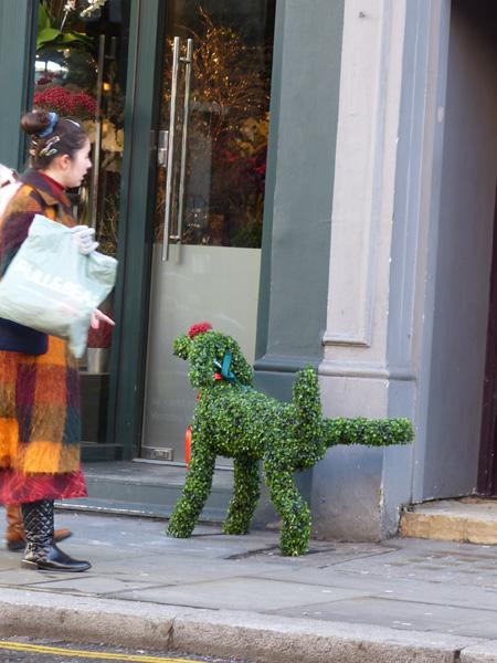 le chien du fleuriste