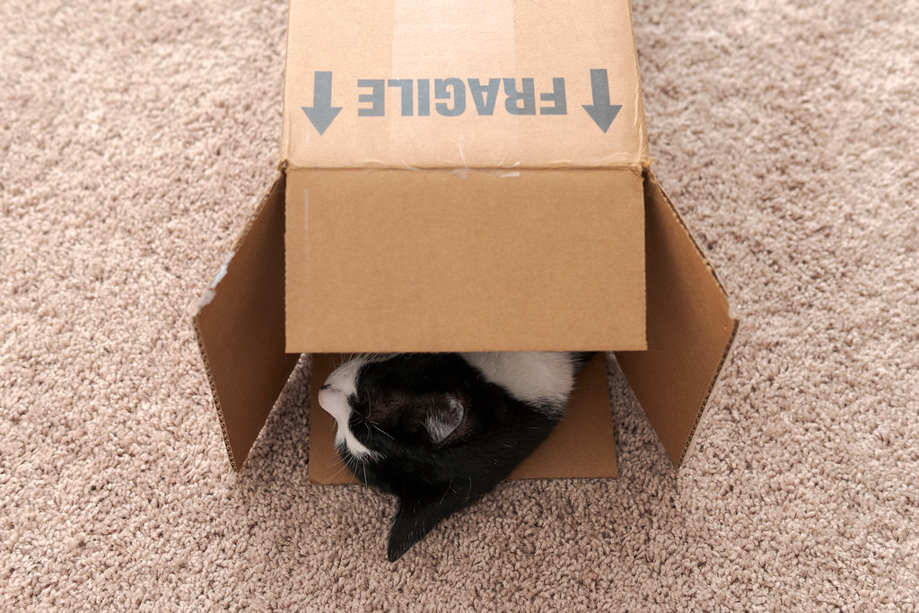 Our black-and-white cat Boo sleeps with just his head sticking out of a narrow box labeled 'Fragile'