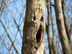 reservoir scream tree