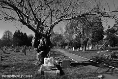 The tree - Streatham Cemetery
