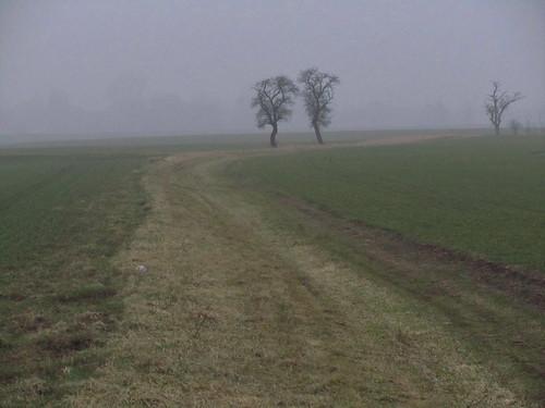 20110316 0203 349 Jakobus Nebel Weg Bäume Feld_K